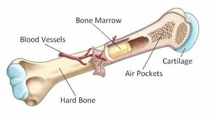 استخوان، مغز استخوان، هزینه هندوستان